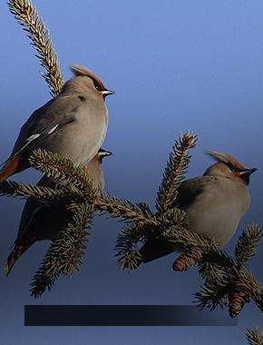 Птицы Югры